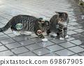 첫 비눗 방울에 허둥지둥하는 도둑 고양이 꿩 호랑이 고양이 형제 69867905