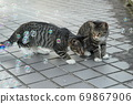 첫 비눗 방울에 허둥지둥하는 도둑 고양이 꿩 호랑이 고양이 형제 69867906