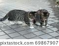 첫 비눗 방울에 허둥지둥하는 도둑 고양이 꿩 호랑이 고양이 형제 69867907