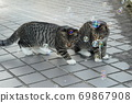 Kijitora kitten brothers of stray cats who flutter at the first soap bubbles 69867908