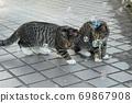 첫 비눗 방울에 허둥지둥하는 도둑 고양이 꿩 호랑이 고양이 형제 69867908