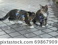 첫 비눗 방울에 허둥지둥하는 도둑 고양이 꿩 호랑이 고양이 형제 69867909