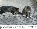 첫 비눗 방울에 허둥지둥하는 도둑 고양이 꿩 호랑이 고양이 형제 69867911