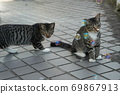 Kijitora kitten brothers of stray cats who flutter at the first soap bubbles 69867913