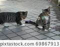 첫 비눗 방울에 허둥지둥하는 도둑 고양이 꿩 호랑이 고양이 형제 69867913