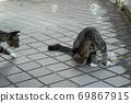 첫 비눗 방울에 허둥지둥하는 도둑 고양이 꿩 호랑이 고양이 형제 69867915