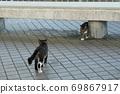 첫 비눗 방울에 허둥지둥하는 도둑 고양이 꿩 호랑이 고양이 형제 69867917