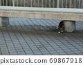 첫 비눗 방울에 허둥지둥하는 도둑 고양이 꿩 호랑이 고양이 형제 69867918