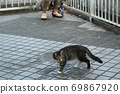 Kijitora kitten brothers of stray cats who flutter at the first soap bubbles 69867920