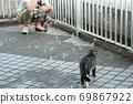 첫 비눗 방울에 허둥지둥하는 도둑 고양이 꿩 호랑이 고양이 형제 69867922