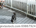 Kijitora kitten brothers of stray cats who flutter at the first soap bubbles 69867924