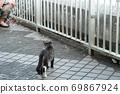 첫 비눗 방울에 허둥지둥하는 도둑 고양이 꿩 호랑이 고양이 형제 69867924
