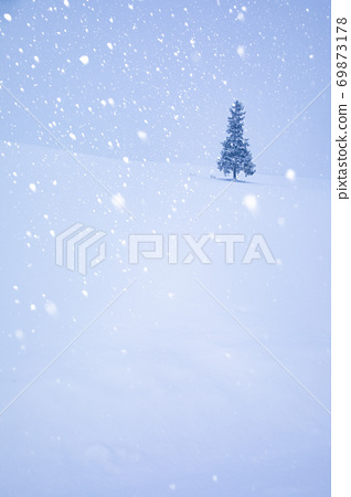 Christmas tree in the snowy field on a midwinter morning 69873178