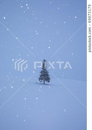 站在一個下雪的早晨的聖誕樹 69873179