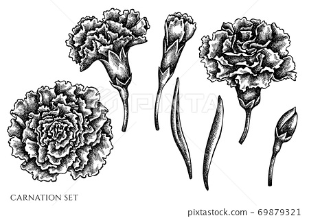 Vector set of hand drawn black and white carnation 69879321