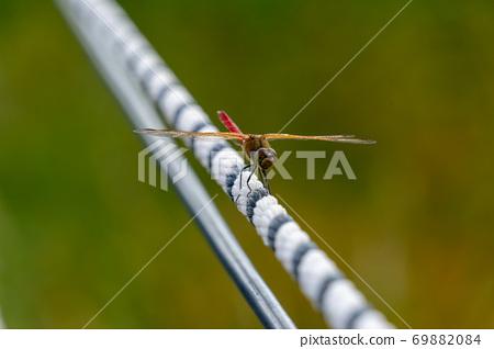 蜻蜓坐在白排 69882084