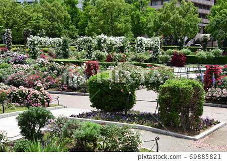 요코하마의 꽃밭 69885821