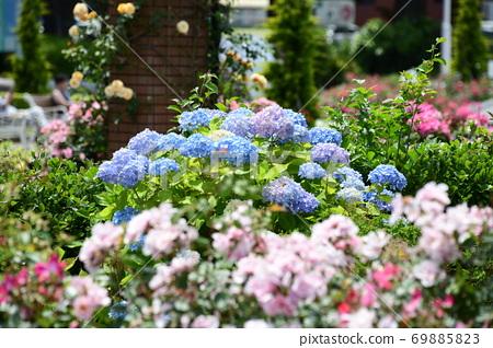 요코하마의 꽃밭 69885823