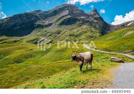 Swiss Alps mountain Grindelwald First hiking trail road in Switzerland 69895940