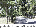 Tokaido Goyu pine trees 69896432