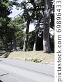 Tokaido Goyu pine trees 69896433