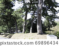 Tokaido Goyu pine trees 69896434