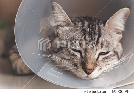 young american shorthair cat sleeping with veterinary plastic cone or E-Collar (Elizabethan Collar) in the head at recovery after surgery. animal healthcare and pet concept 69900090