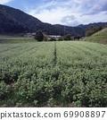 Buckwheat field in early autumn 69908897