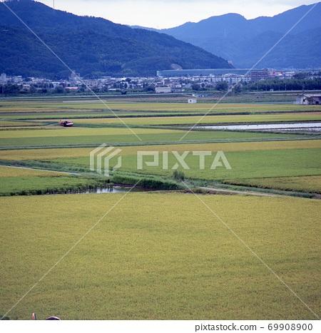 京都府龜岡的稻田 69908900