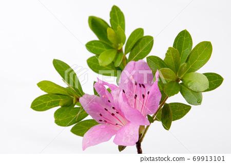 樹枝上美麗的小花素材背景特寫 69913101