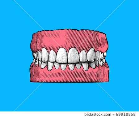 Vintage human tooth and gum illustration on blue BG 69918868