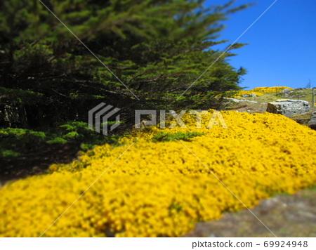 Falkland Islands Stanley Flower Diorama Style 69924948