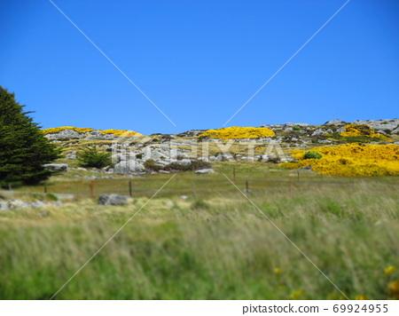 Falkland Islands Stanley Flower Diorama Style 69924955