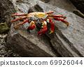 Sally Lightfoot Crab on Rock 69926044