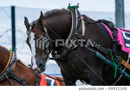 Nighter's Banei賽馬形象帶廣賽馬場 69932169