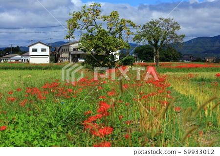 피안 꽃 피는 풍경 69933012