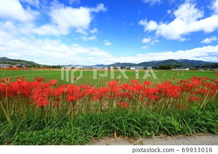 가을 하늘과 피안 꽃 69933016