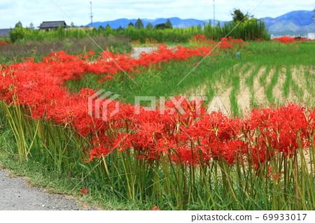 농도에 피는 피안 꽃 69933017