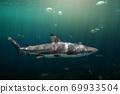 Blacktip reefs shark swimming. 69933504
