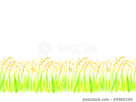 Illustration of rice ears drawn in watercolor 69960389