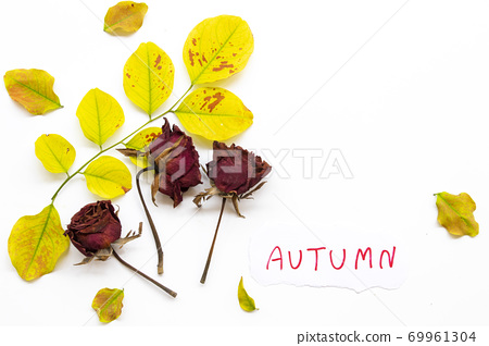 autumn message card handwriting with leaf, dried rose flowers in autumn season  69961304