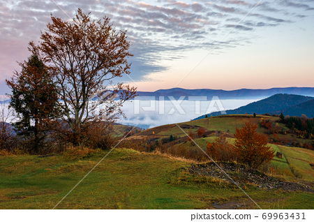 stunning rural landscape. foggy scenery at dawn in autumn season. trees on mountain hills in colorful foliage. panoramic view. fence on the hillside 69963431