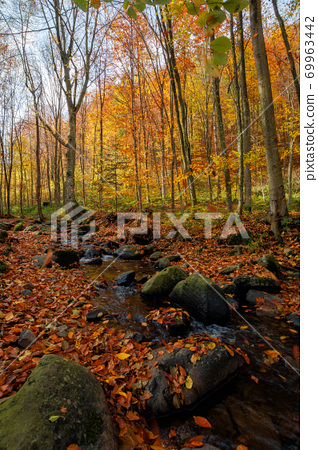 brook in the forest. wonderful nature scenery on a sunny autumnal day. trees in colorful foliage. water stream among the rocks and fallen leaves on the ground 69963442