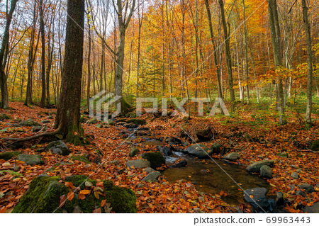 brook in the forest. wonderful nature scenery on a sunny autumnal day. trees in colorful foliage. water stream among the rocks and fallen leaves on the ground 69963443
