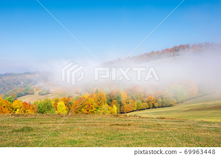 misty morning autumn scenery. mountain landscape with trees in colorful foliage on the grassy meadow 69963448