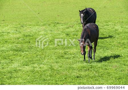 賽馬牧場小馬駒圖像北海道 69969044