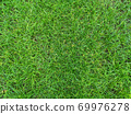 Green grass texture background Top view 69976278