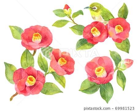 Watercolor various camellia flowers 69981523