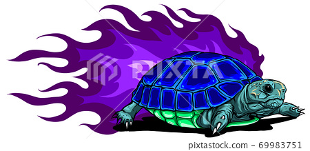 vector Burmese star tortoise on white background 69983751
