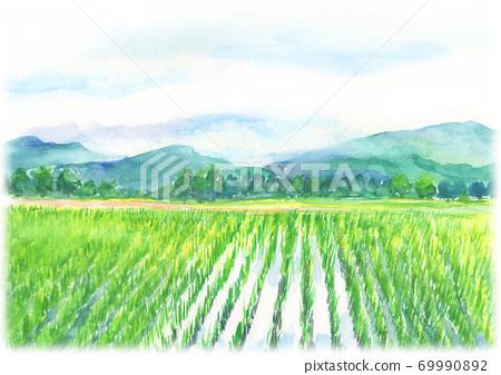 農村稻田景觀畫水彩 69990892